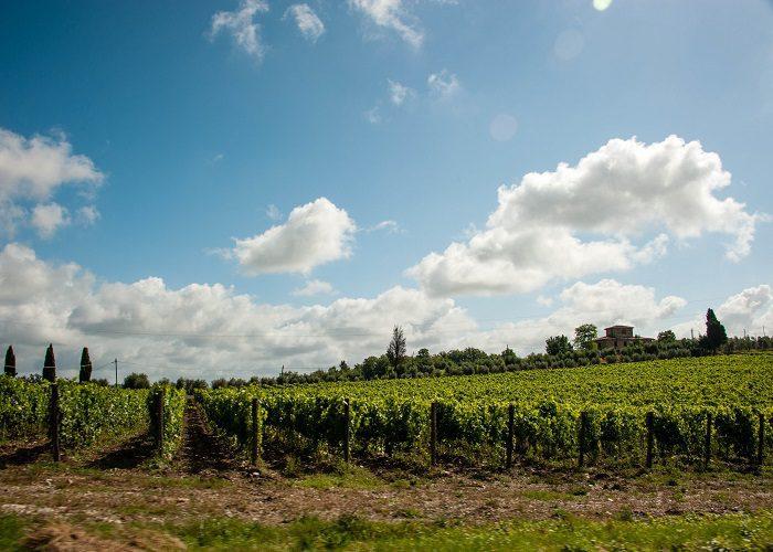 Tuscan farm stay vineyard. Tuscany region of Italy