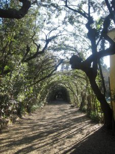 Florence for Families - Boboli Gardens Path